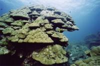 Это тоже кораллы !