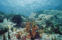 Кораллы...