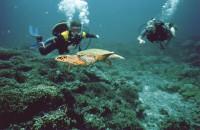 Наблюдаем за плывущей черепахой