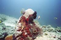 Кораллы, рыбки...