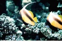 Рыбки...