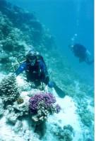 Игорь и коралл