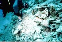 Игорь рядом с осьминогом