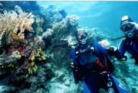 У коралла