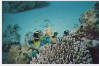 Шоколадные рыбки и рыба-клоун