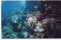 Кораллы и рыбки...