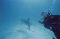 Игорь и дельфин