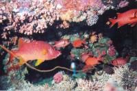 Красные пролетарские рыбешки