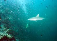 Под акулой баллон Ольги...