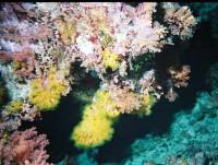 Коралл ночью...