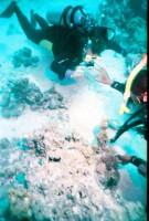 Стоун фиш под этим рифом