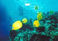 Тропические рыбки... Сверху- дайверы ! :)