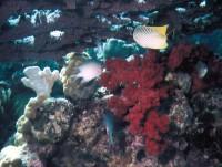 Под веерным кораллом и не такое увидеть можно