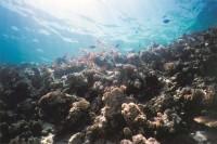 Коралловые будни...