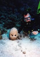 Вот такие странные бывают кораллы