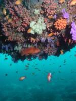 Просто красивый коралл