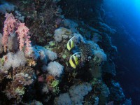 Коралл и антенны