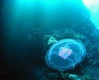Медуза тоже может быть красивой !