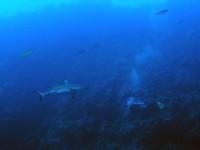 Человек и акула- голбоко наплевать друг на друга