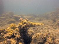 Подводный мир Вьетнама...