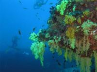 Кораллы на Fotteyo
