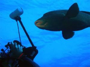 """Идут съемки фильма """"про рыбок..."""" :)"""