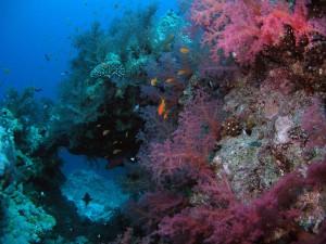 Кораллы и рыбки... Мелочь- а приятно !