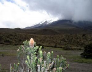 Вот он- символ Эквадора !
