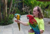 Человек и попугаи