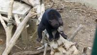 Медведь прикалывается :)