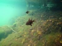 Озеро с медузами - медузы за кадром...