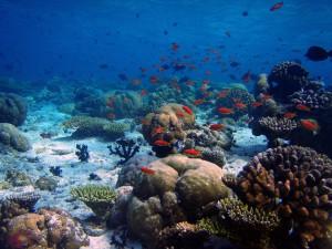 Коралловый сад по-мальдивски
