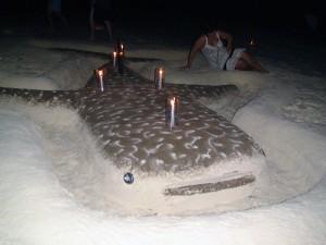 Песчаная акула...