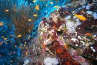 Коралльчик веселеньких расцветочек...