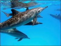 Дельфины- это хорошо !