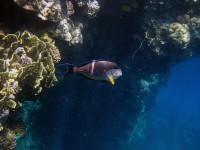 Хирург у рифа
