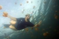 Среди медуз