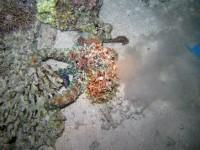 Тот самый осьминог