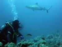 Дедушка и акула