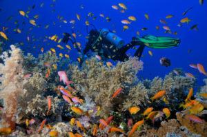 На рифе Рас Мохаммед